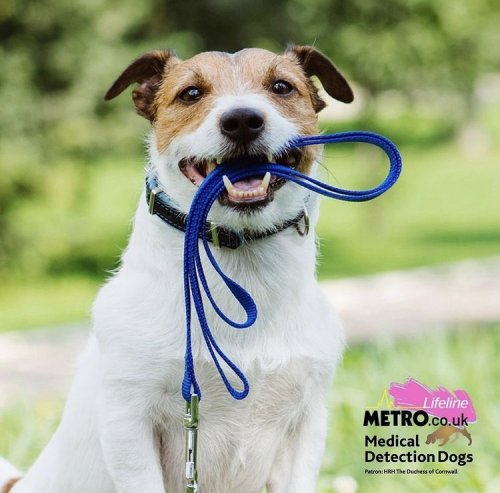 Metro Lifeline campaign for MDD: Why we need your support