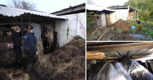 Couple banned from keeping animals after horses found in 'horrendous conditions'