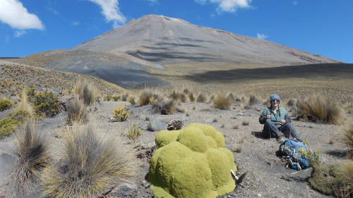 Weird-looking plant in Peru likely sprouted before Columbus arrived, scientists say