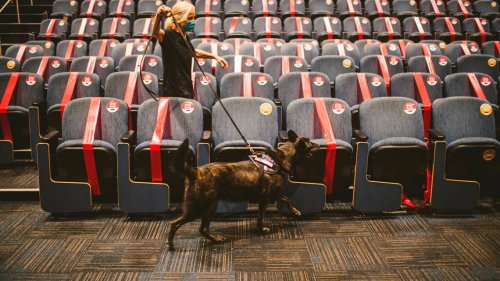 Are dogs really that good at sniffing out COVID? Another study leaves no doubt