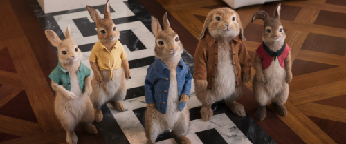 'Peter Rabbit 2' director Will Gluck makes the most of his Surface devices professionally and personally
