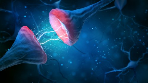 Brain Cells Can Mislead Each Other, Cause Mental Disorders