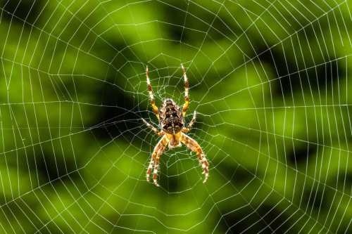 Spiders May Not Know It But They Are Making Music