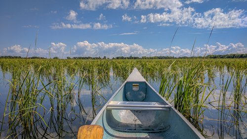 EPA directs Minnesota to list waters impaired for wild rice