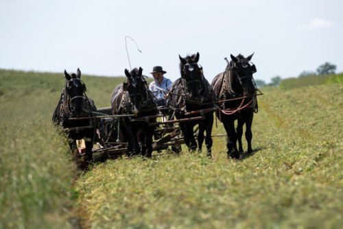 Amish paradise? The traditionalist Christian group's population has been growing in Minnesota. A lot. | MinnPost
