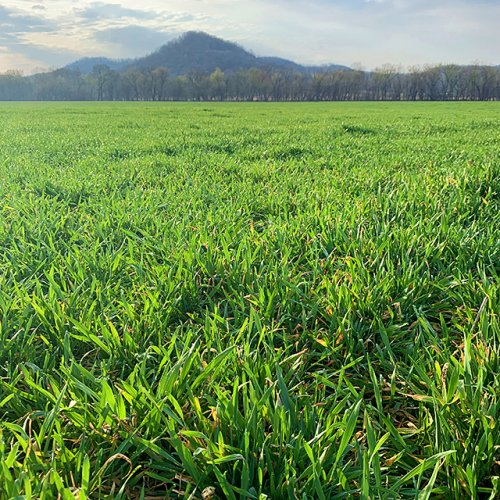 More cover crops could help Minnesota's soil and water. What do farmers think about it?