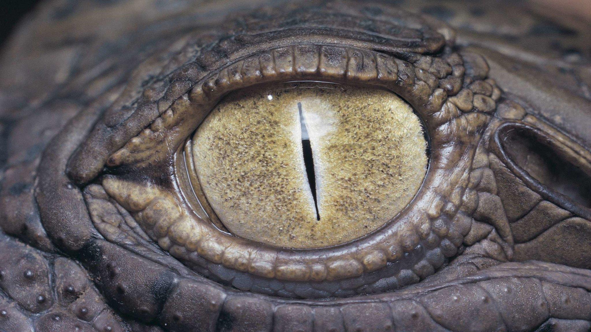 The Killer Crocodile That Haunted the Waters of Burundi