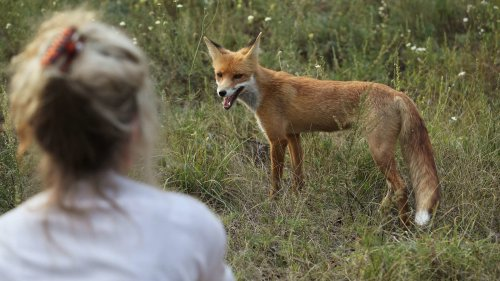 Chernobyl May Not Be Habitable for Humans for Another 24,0000 Years, But Wildlife Is Thriving