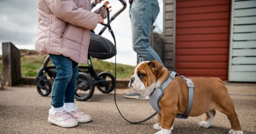 Dog owners using harness instead of collar could be hit with giant £5000 fine