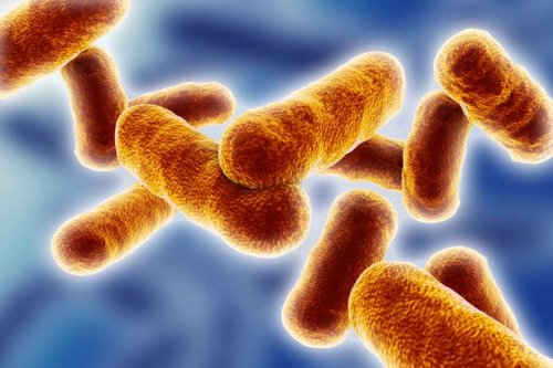 World at risk from new tuberculosis threat as disease becomes resistant to drugs