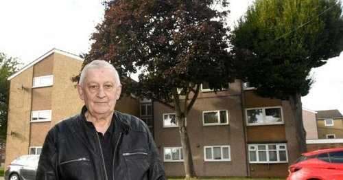 Man living in constant darkness as 70ft trees block sunlight and TV signal