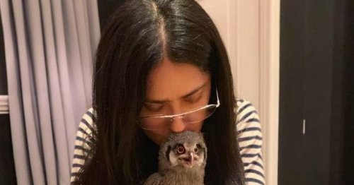 Salma Hayek baffles fans after sharing that her pet owl watches TV with her