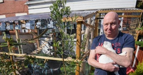 Couple heartbroken as council warn their giant cat jungle gym may be torn down