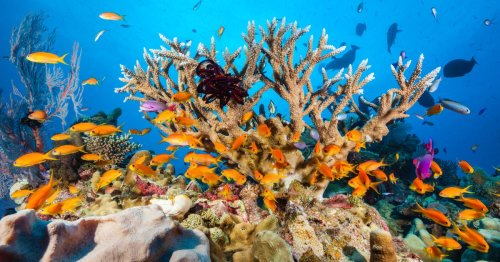 Dead bodies used to create new coral reefs as part of 'green burial' service