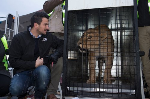 Two lionesses touch down in Britain after rescue from horrific German circus