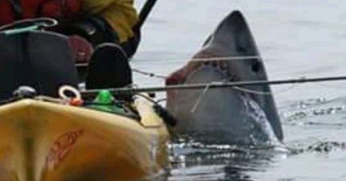 Shark drags fisherman overboard and capsizes his kayak with brute strength