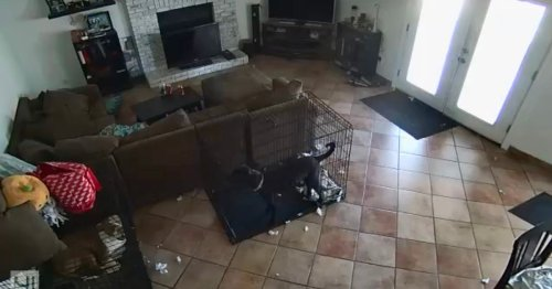Woman shares freaky security footage of 'ghost' removing dog's collar