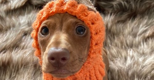 10 amazing dogs dressed up for Halloween