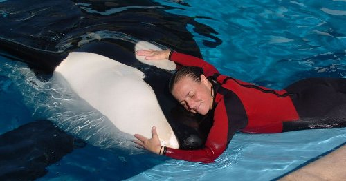Gruesome 'catastrophic' injuries of trainer 'scalped' by orca in killer attack