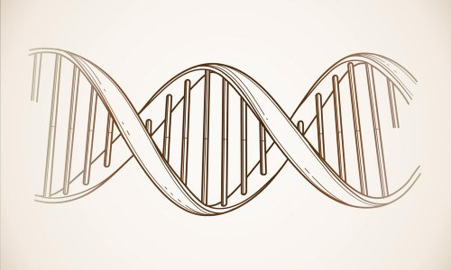 Around the World in 50,000 Years: The Genetics of Race