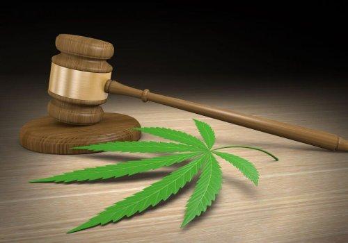 Oklahoma medical marijuana regulators sued over seed-to-sale tracking