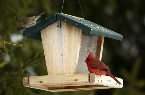 Why you'll find more birds but less birdsong in Michigan right now
