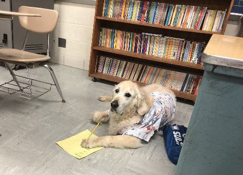 Buster the therapy dog remembered as peanut butter-loving family member at Swartz Creek schools