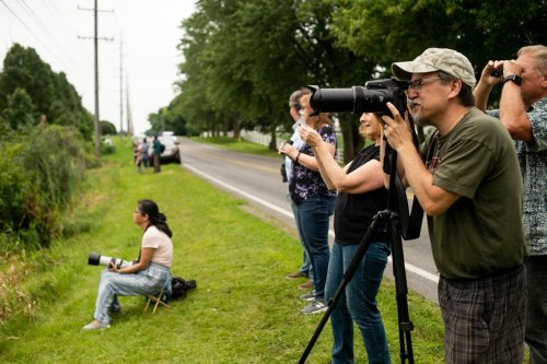 Rare pink bird is still in Michigan and continues to draw a crowd hoping to catch a glimpse