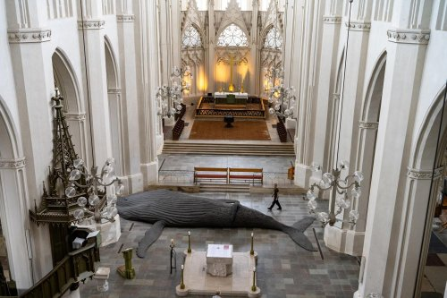 Was macht der Wal im Dom? Greifswald zeigt riesige Meeressäuger-Skulptur