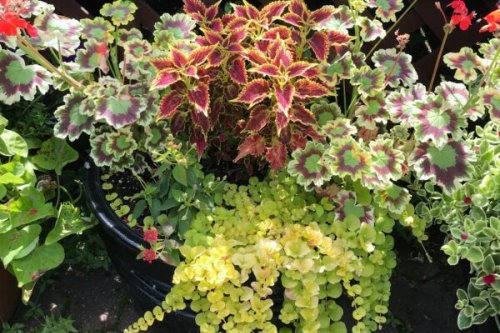 How to Design A Planter to Brighten Your Vancouver Patio