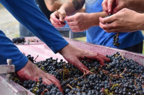 Meet the Winemakers Rethinking B.C.'s Once-Maligned Hybrid Grapes