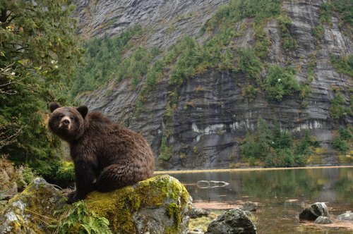 Photographing the Great Bear Wild