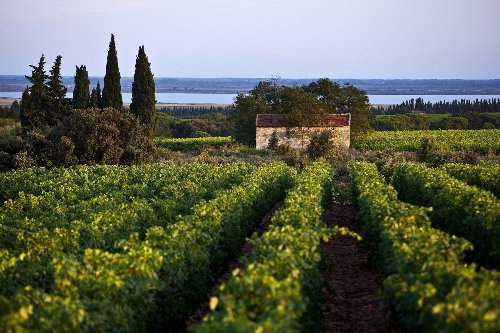 An Introduction to the Rhone Valley's Unique Rosé Wines
