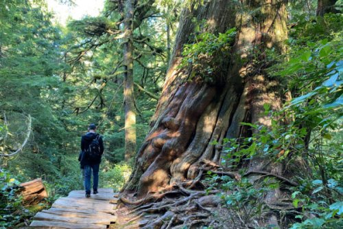 An 80-year-old Indigenous Leader Now Guides Tours of the Old-Growth Forests He Helped Protect