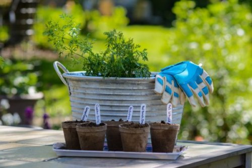 How to Grow Your Own Food in Vancouver
