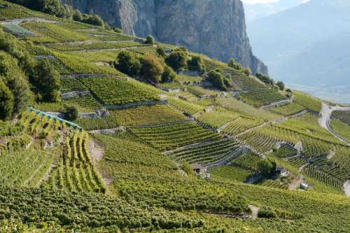 The Swiss Mountain Wine Trail You've Likely Never Heard Of