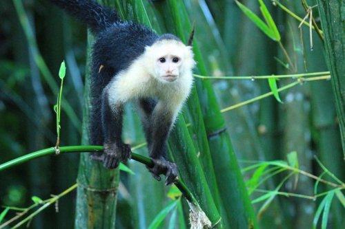 Costa Rica's Osa Peninsula