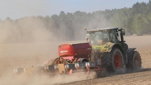 Studie: Klimawandel macht neue Nutzpflanzen-Sorten notwendig