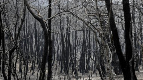 24 Menschen in Syrien wegen Brandstiftung hingerichtet