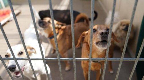 """Viele """"Lockdown-Hunde"""" landen in britischen Tierheimen"""