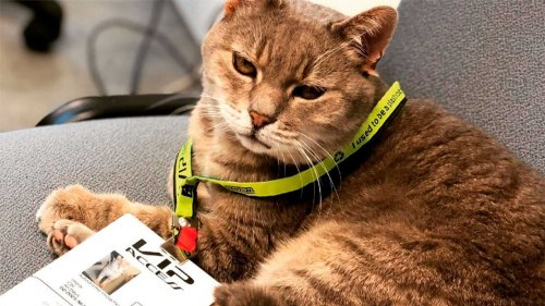 The secret of Imola's lucky F1 paddock cat