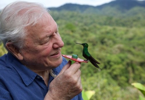 For David Attenborough, Netflix's Life in Color Is a Lifelong Dream Fulfilled