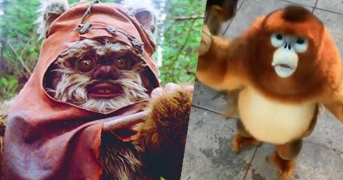Ewok-Like Monkey Goes Viral, Now 'Star Wars' Fans Want a New 'Ewok' Movie