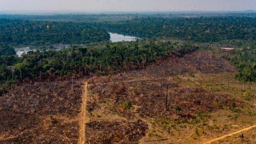Brésil : Jair Bolsonaro menace plus que jamais l'avenir de l'Amazonie