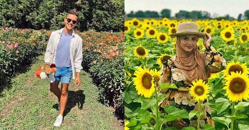 6 Stunning Flower Fields Near Montreal You Can Wander Through This Summer