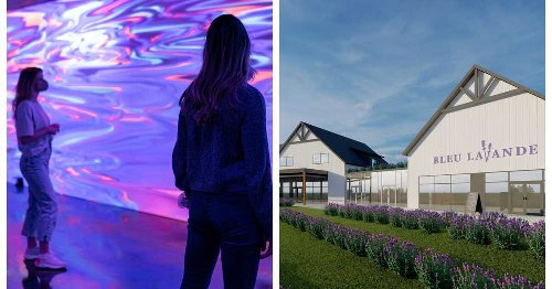 Here's A First Look At Bleu Lavande's New Location & Immersive Experience (PHOTOS)