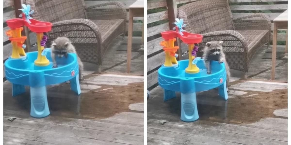 This Video Of A Montreal Raccoon Taking A Shower Is Everything We Need Right Now
