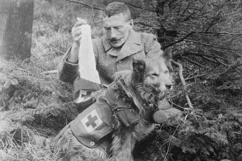 I Guerra Mundial: la historia de los perros compasivos