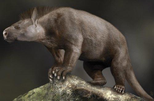 El desarrollo del tobillo y el pie permitió sobrevivir a los mamíferos
