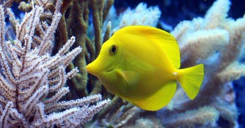 Estrés en peces. Te contamos los signos y sus causas